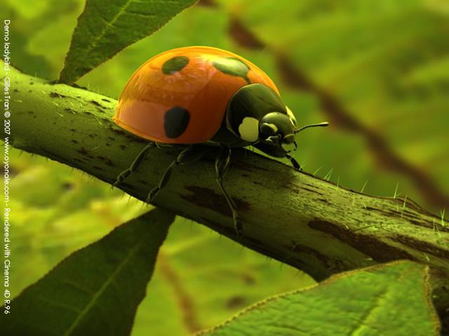 Free 3D models - Ladybird (POV-Ray,C4D,OBJ)