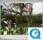 Plant demo  - 360° panorama (QTVR)